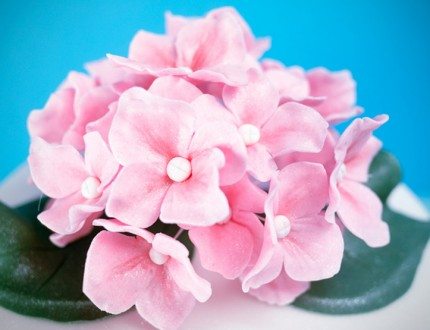 Picture of edible hydrangea flower