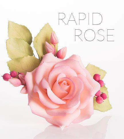 Rapid rose