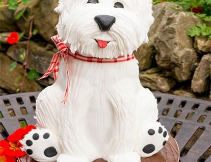 Westie Terrier Dog