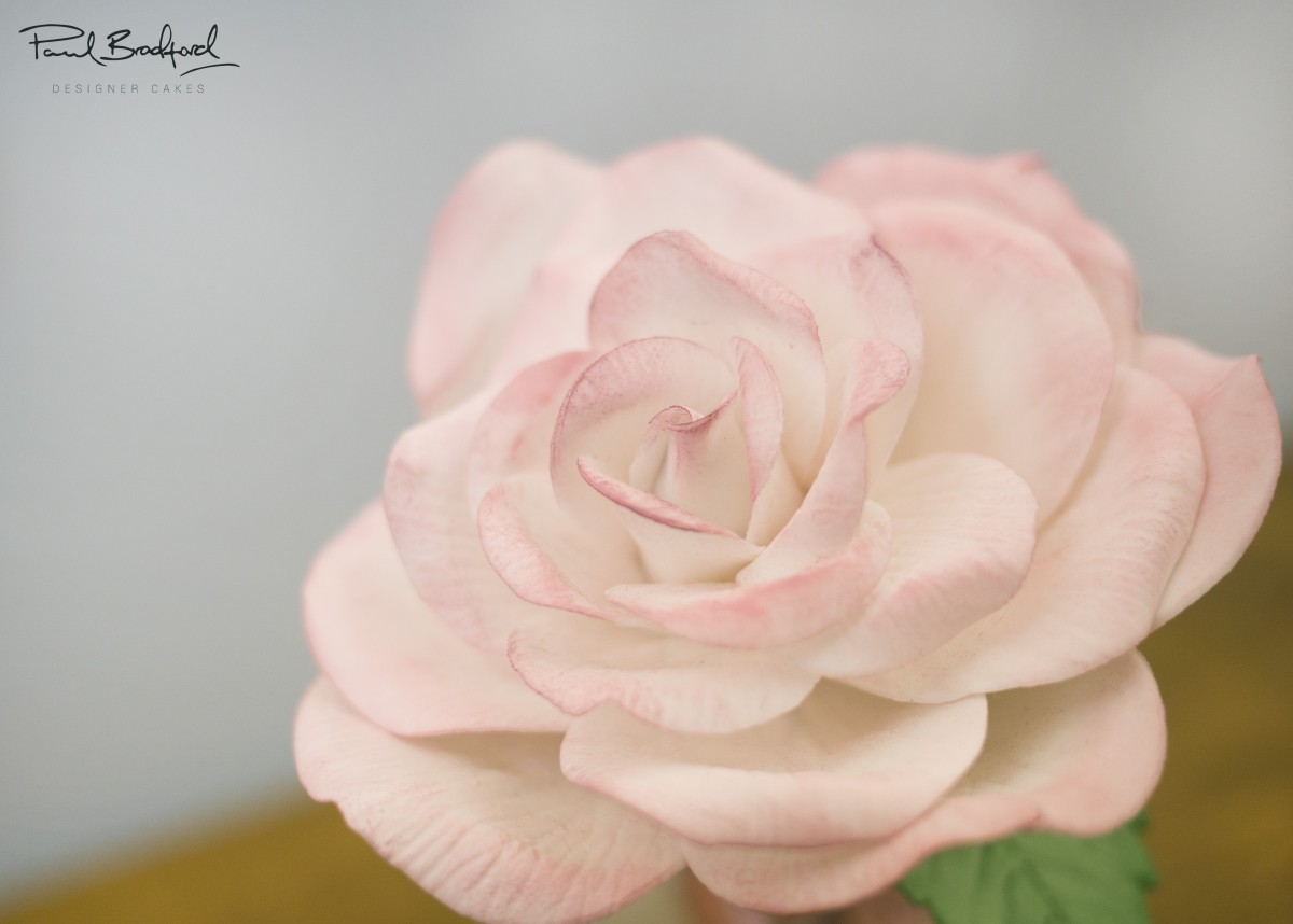 How To Make A Sugar Rose Cakeflix Flower Diagram Lesson One Anatomy Photo Gallery
