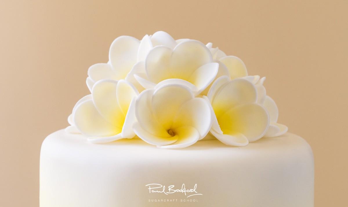 Frangipani Flowers - CakeFlix