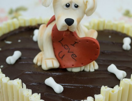 Close up modelled dog
