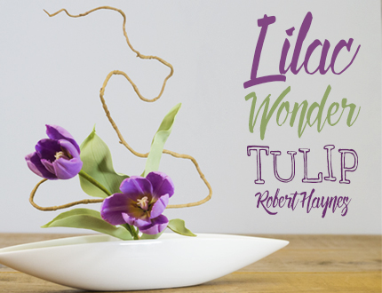 Lilac Wonder Tulip Sugar Flower
