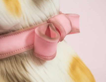 Close up of cats bow