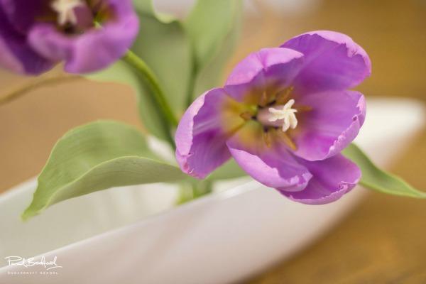 easter-sugarpaste-tulip