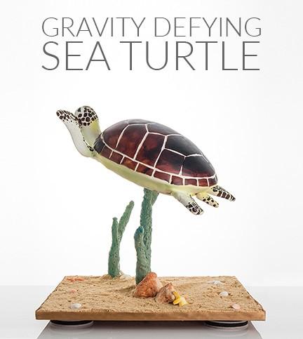 Gravity Defying Sea Turtle