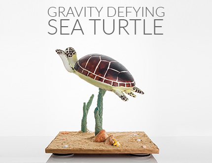 Gravity Defying Sea Turtle