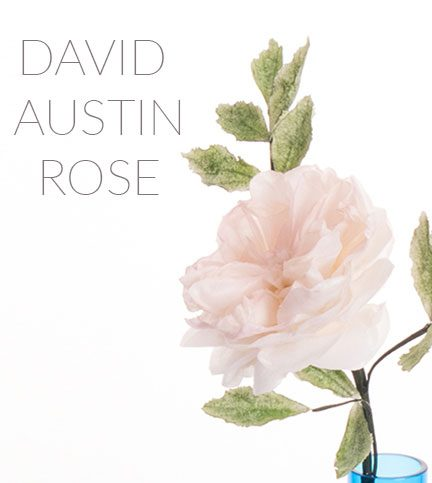 David Austin rose technique