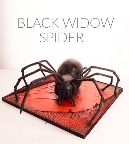 Black Widow Spider – FILMED LIVE