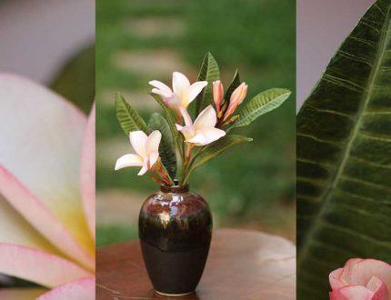 frangipani cake tutorial