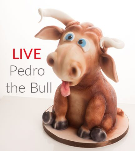 Pedro the Bull – Bitesize