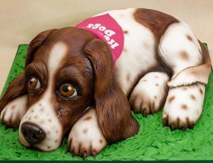 springer spaniel cake - cake of the month