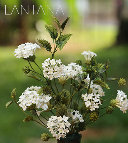 Lantana sugar flowers – Bite Sized