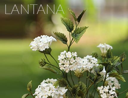 Lantana sugar flowers
