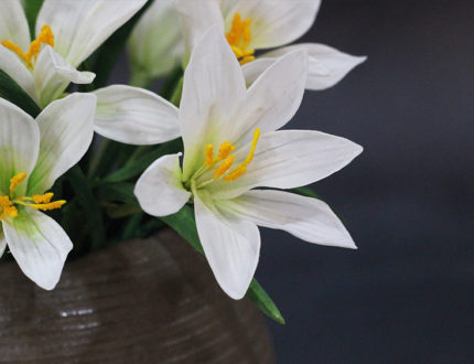 Rain lily close up