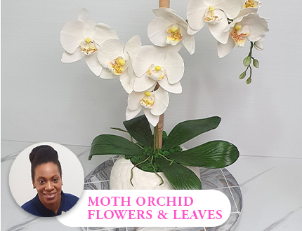 Moth Orchid flowers & leaves