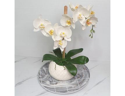 Moth orchid flower leaves full
