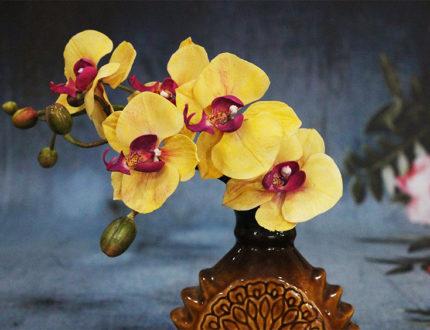 Moth orchid full